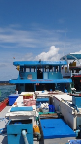 Maldivian fishing boat - Fresh From The Sea! Cute!