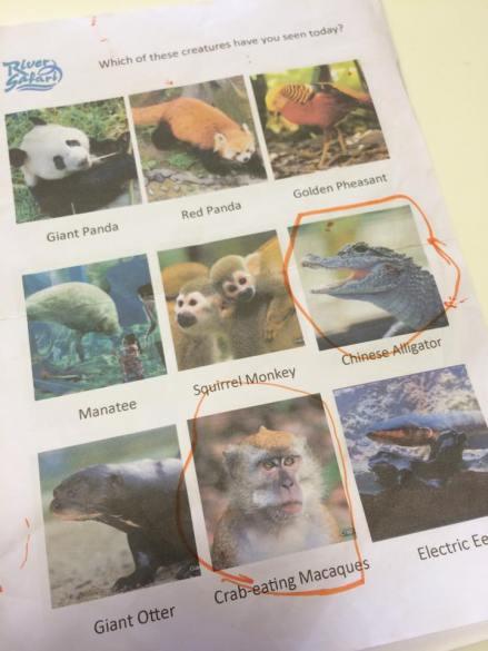 River Safari Search page