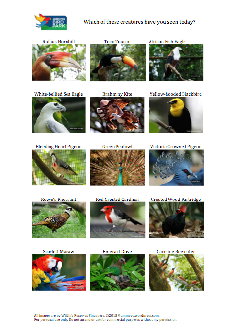 Jurong Bird Park Search - click to download!