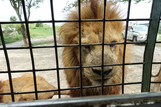 Beppu African Safari