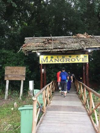 Bintan Mangrove
