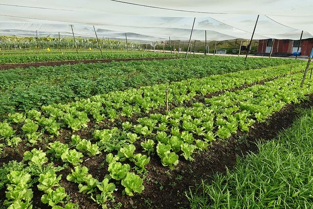 Quan Fa Organic Farm