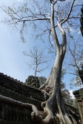 Wat Prom Angkor Wat Cambodia Siem Reap